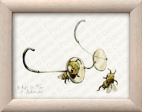 Brillenbienen
